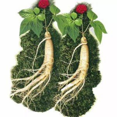 Korean Floral Ginseng Extract